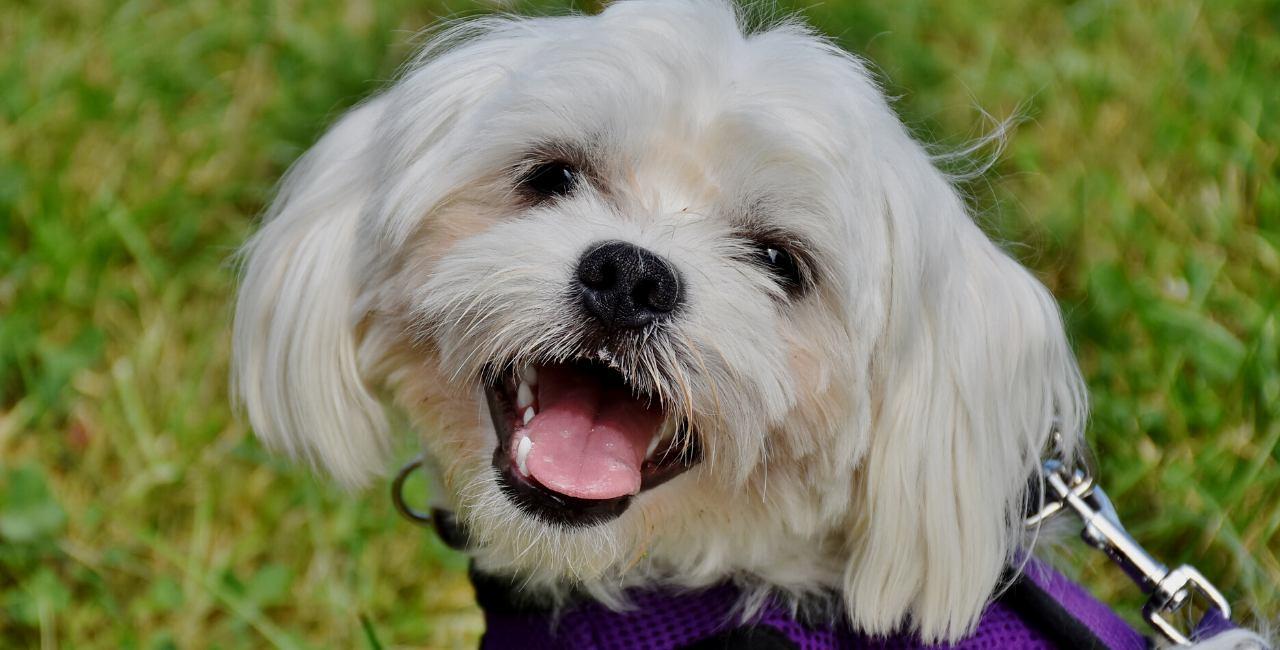 Read flower essences for dogs success stories