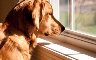 Bach Flowers and the Emotions of Separation Anxiety in Dogs