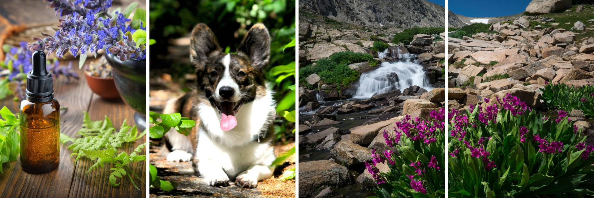 Aldaron flower essence guides for dogs