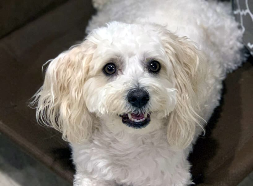Anxious, Reactive, Over-Attached Rescue Dog   A Flower Essence Success Story