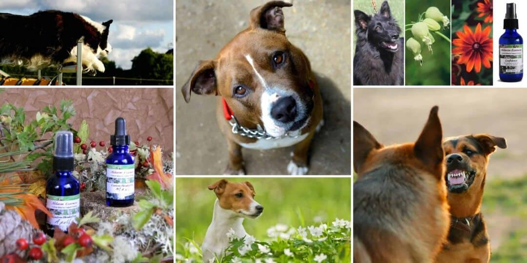 Bach flower blends for dogs| Aldaron Essences