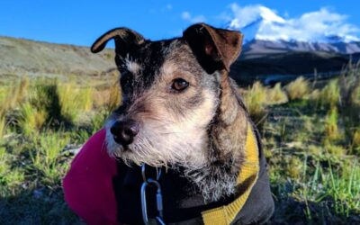 Enhance Your Dog's Senior Years with Bach Flower Remedies