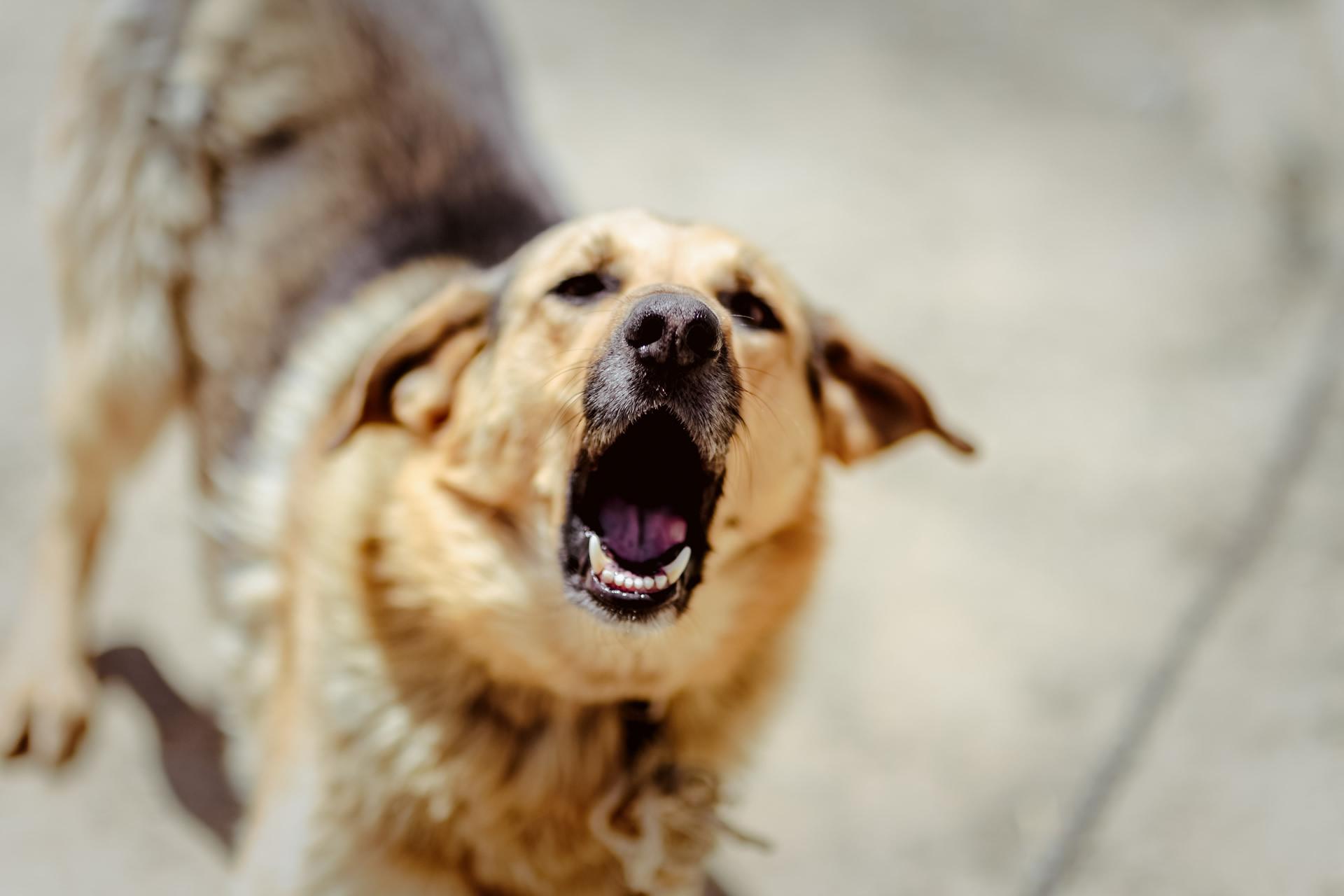 Flower essences for aggressive, reactive dog behavior