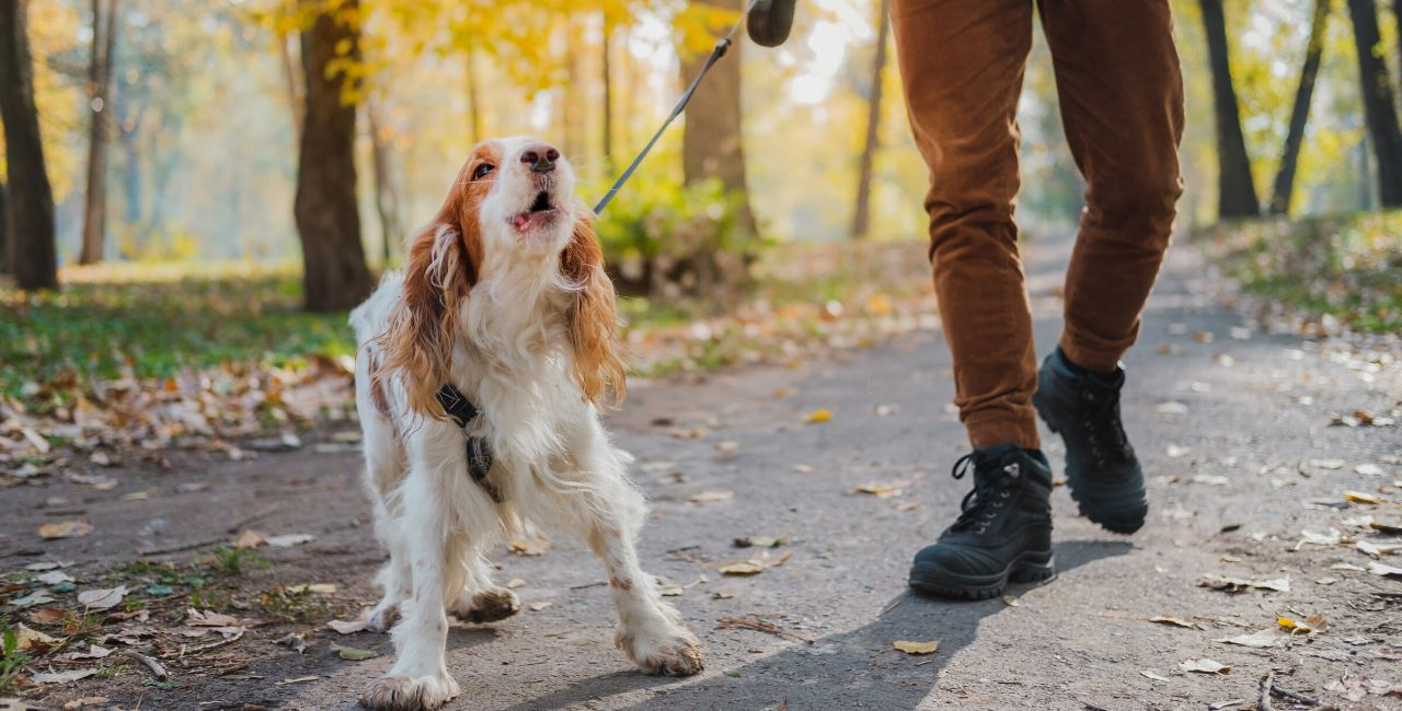 Flower essence selection guides for dog behavior issues
