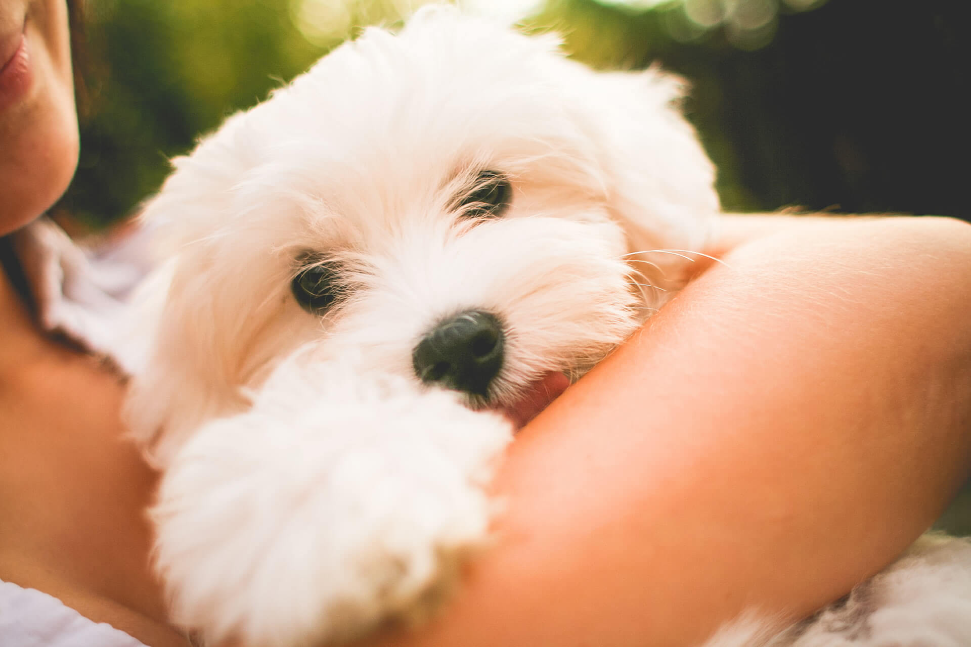 Flower essences for clingy over-attachment, separation anxiety in dogs