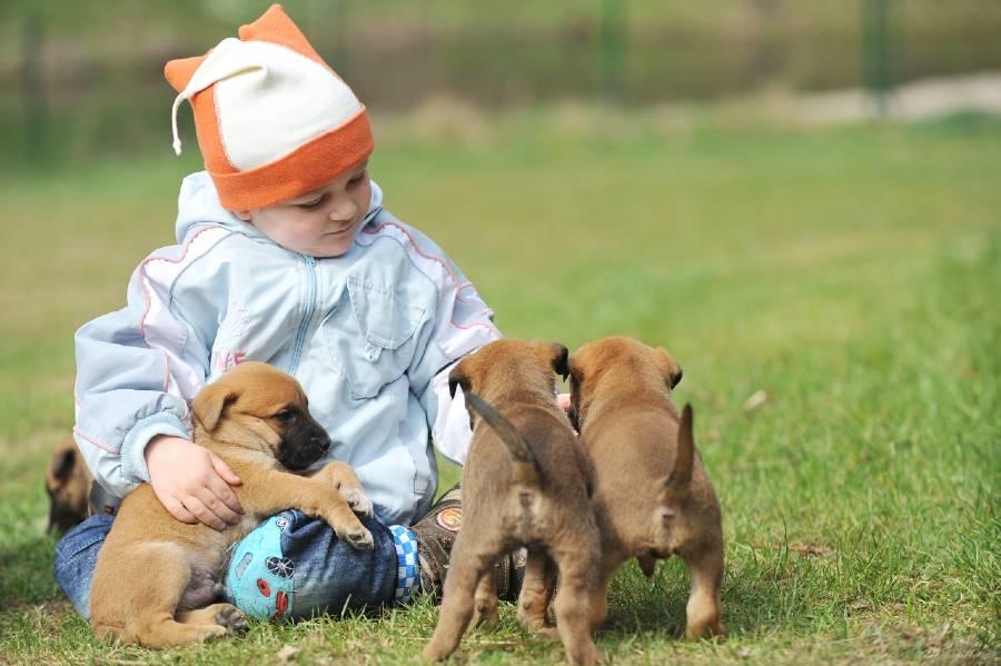 Flower essences to help puppy socialization