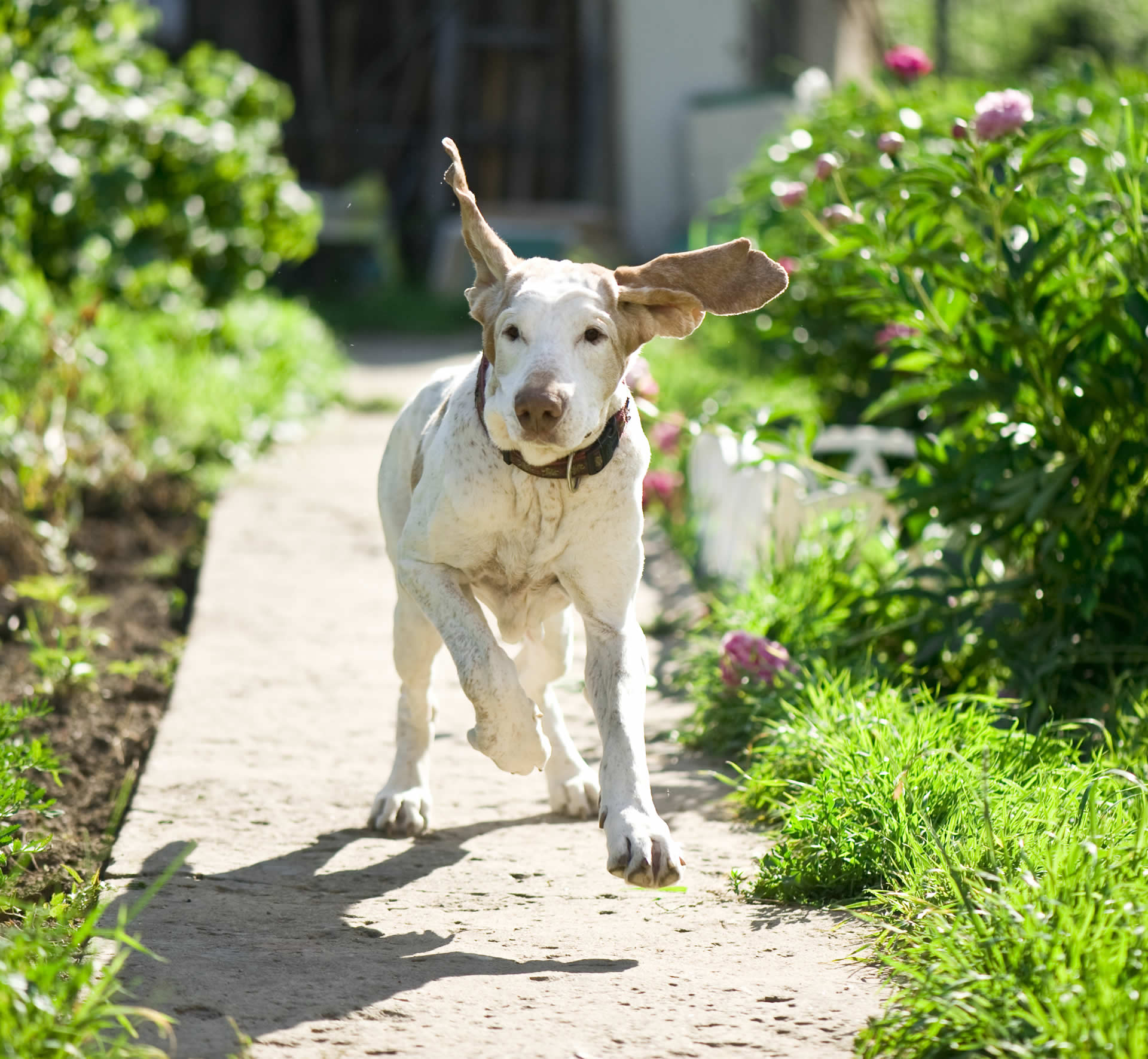 Flower essences for dogs that panic when left alone