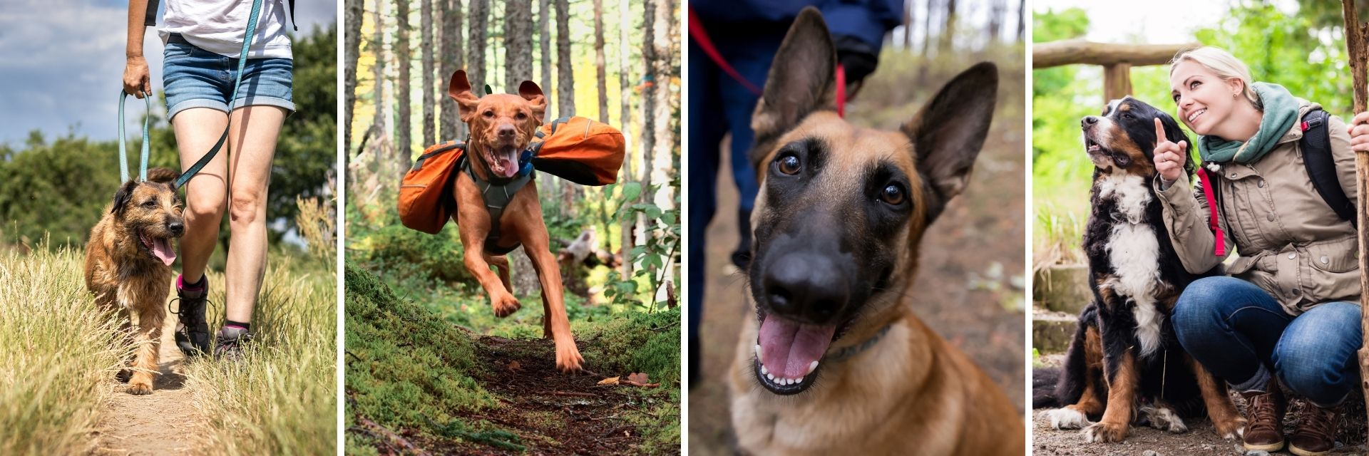 Aldaron dog obedience training and behavior articles