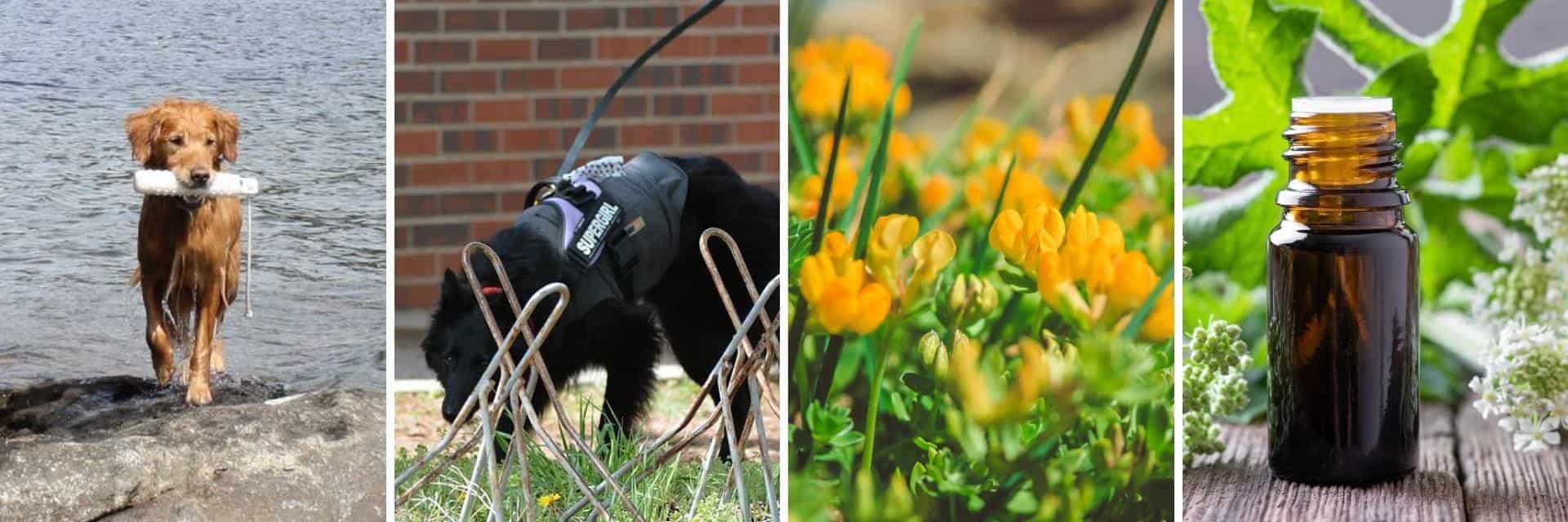 Aldaron flower essence blends for dogs - success stories