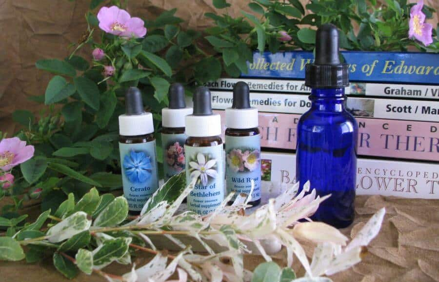 Bach flower remedies for sibling rivalry in dogs