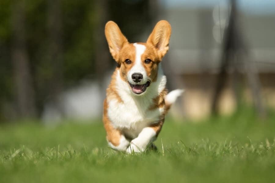 Happy confident dog