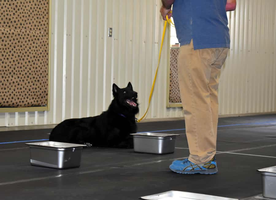 Rich and Soar K9 Nosework trial