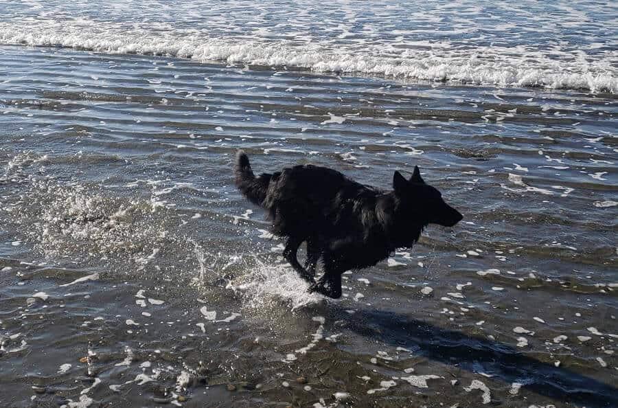 Fear Reactive Adolescent Dog | A Flower Essence Success Story