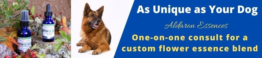 Order a consult for a custom flower essence blend for your dog
