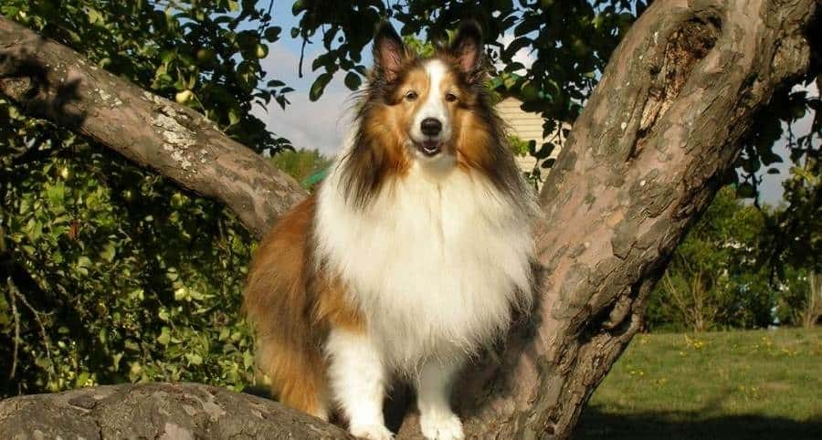 How to increase confidence in dogs