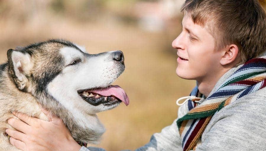 Sociability enhancing remedy for dogs