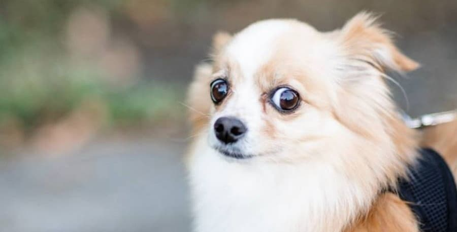 Natural remedies for anxious fearful dogs