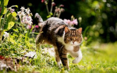 Using Alcohol-Based Flower Remedies with Cats